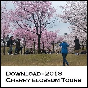 Cherry blossom Kanazawa