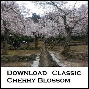 Cherry blossom Hiroshima