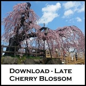 Cherry blossom Hirosaki