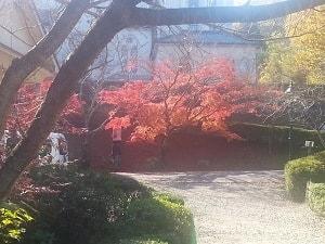 Autumn colour at Meiji Mura Museum near Nagoya
