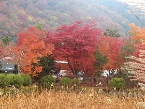 Views from Arashiyama, Kyoto