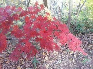 Sapporo autumn colour
