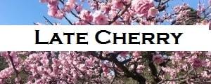 Cherry blossom Ogawara